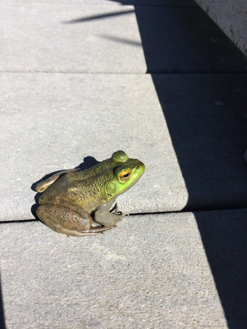 A Frog Captured with Kent's Assistance