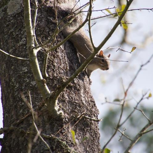 Squirrel Alarm System
